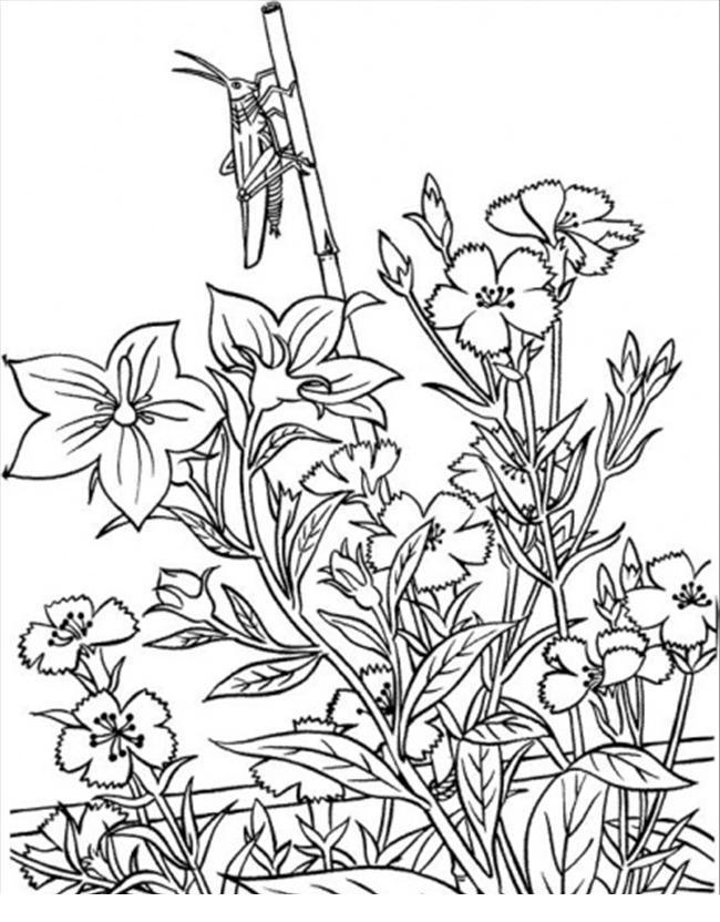 Поле васильков с кузнечиком Фото раскраски цветы