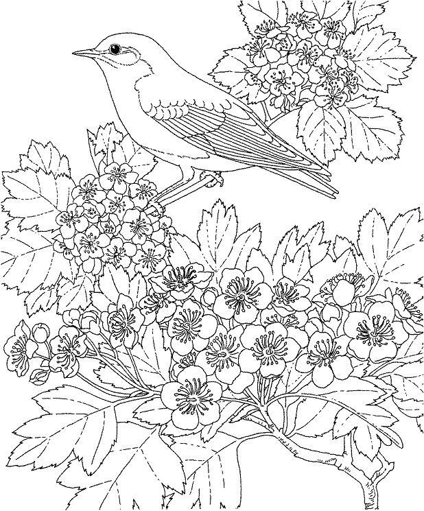 Птица на цветущей ветке Раскраска цветок для скачивания