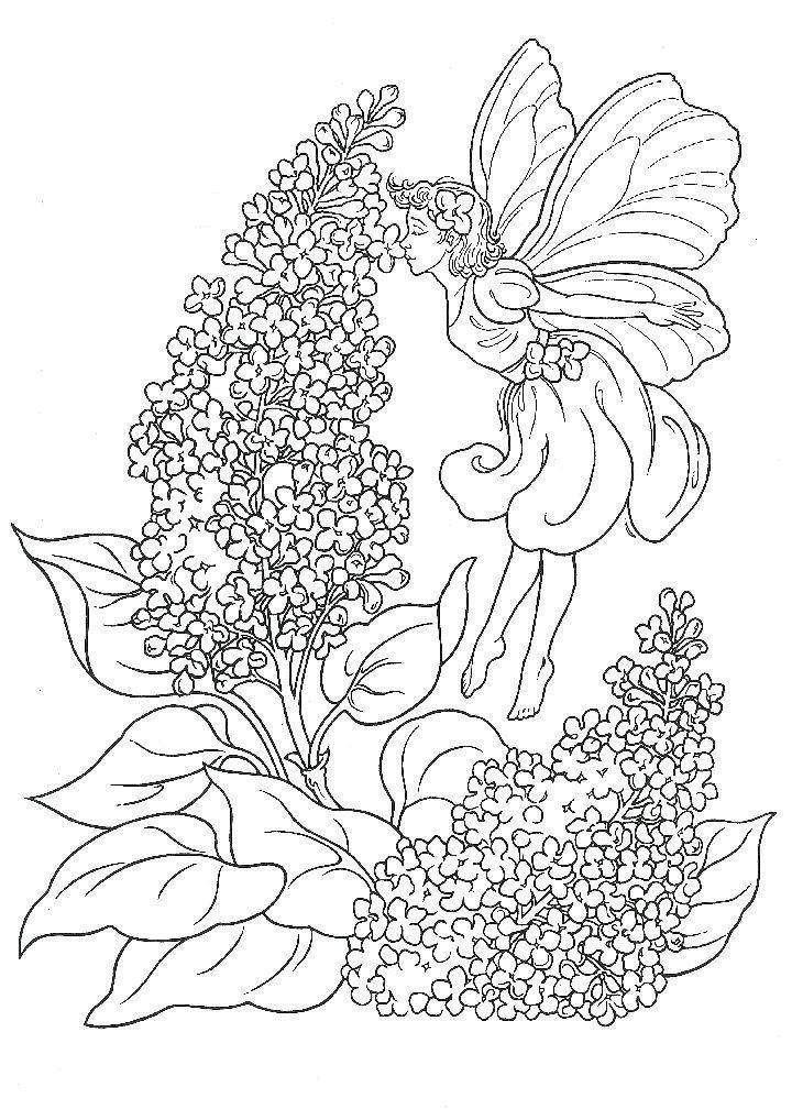 Волшебные цветы сирени с феей Раскраски цветочки онлайн