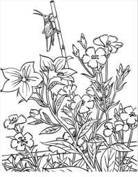 Поле васильков с кузнечиком Раскраски цветы скачать