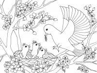 Птица с птенцами на цветущем дереве Новые раскраски цветы