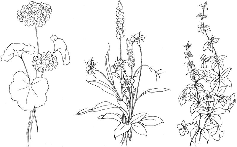 Экзотические цветочки Разукрашки цветы