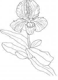 Орхидея Для детей онлайн раскраски с цветами