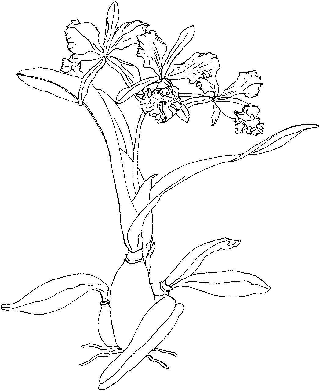 Красивая орхидея Для детей онлайн раскраски с цветами