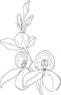Цветущая орхидея Для детей онлайн раскраски с цветами