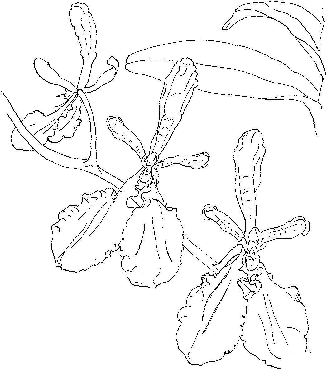 Три цветка орхидеи Для детей онлайн раскраски с цветами