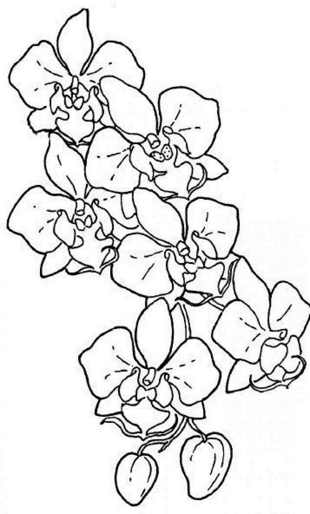 Орхидеи Для детей онлайн раскраски с цветами