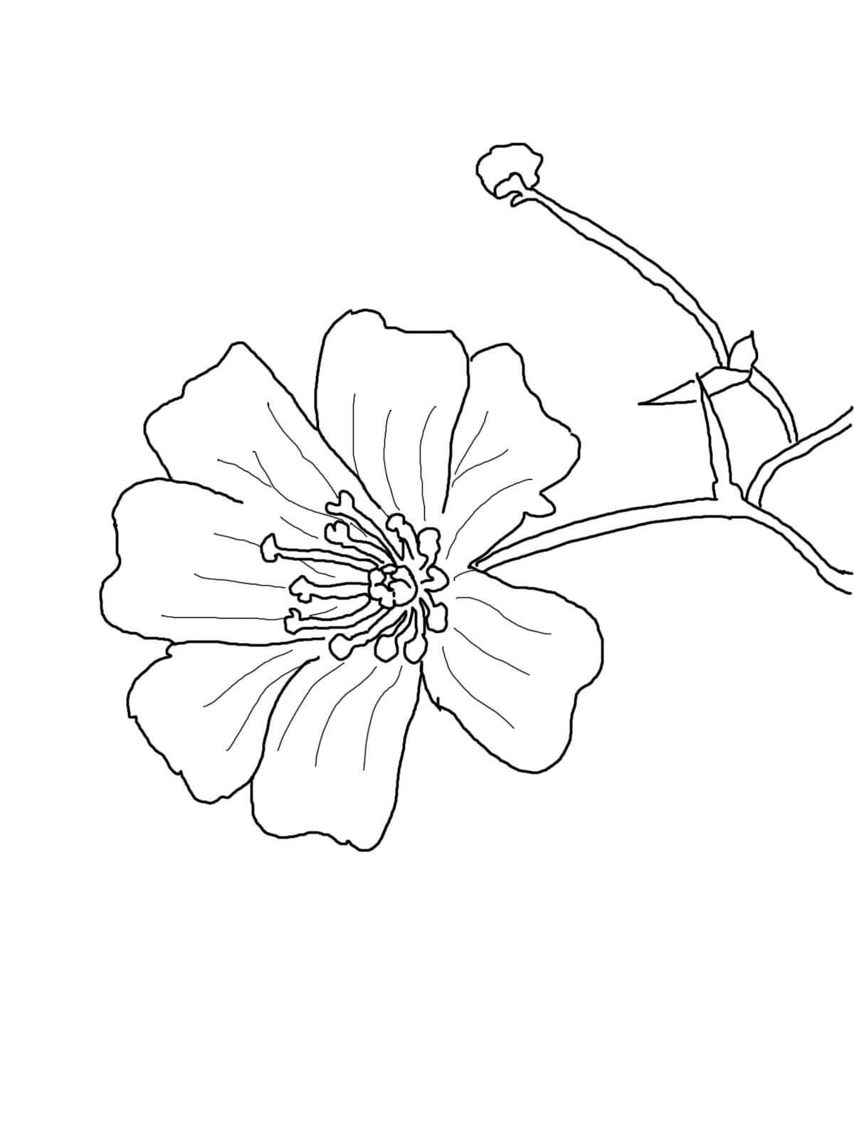 Цветки на ветке цветы раскраски онлайн бесплатно