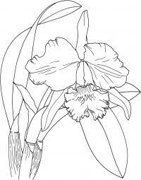 Большой цветок орхидеи Для детей онлайн раскраски с цветами