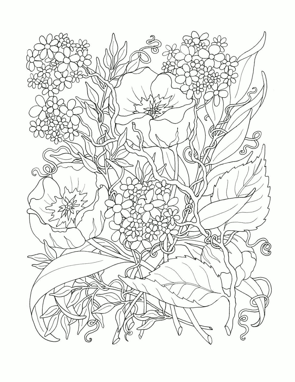 Волшебные цветы мака Распечатываем раскраски цветы бесплатно