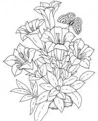 Лилии и бабочка Разукрашки цветы
