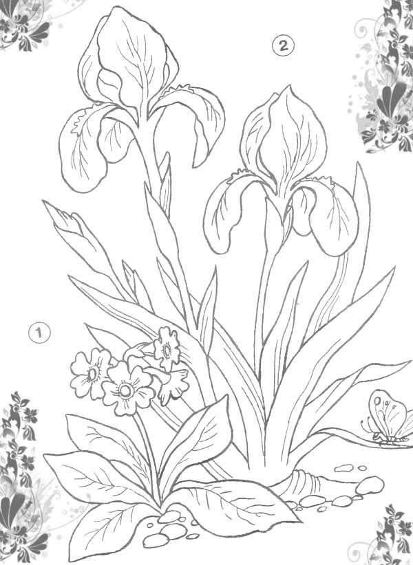 Клумба с ирисами Красивые раскраски цветов