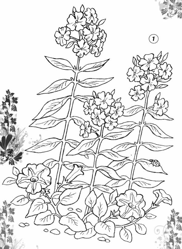 Клумба с петунией Красивые раскраски цветов