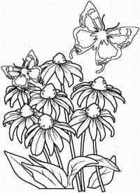 Клумба с цветами Красивые раскраски цветов