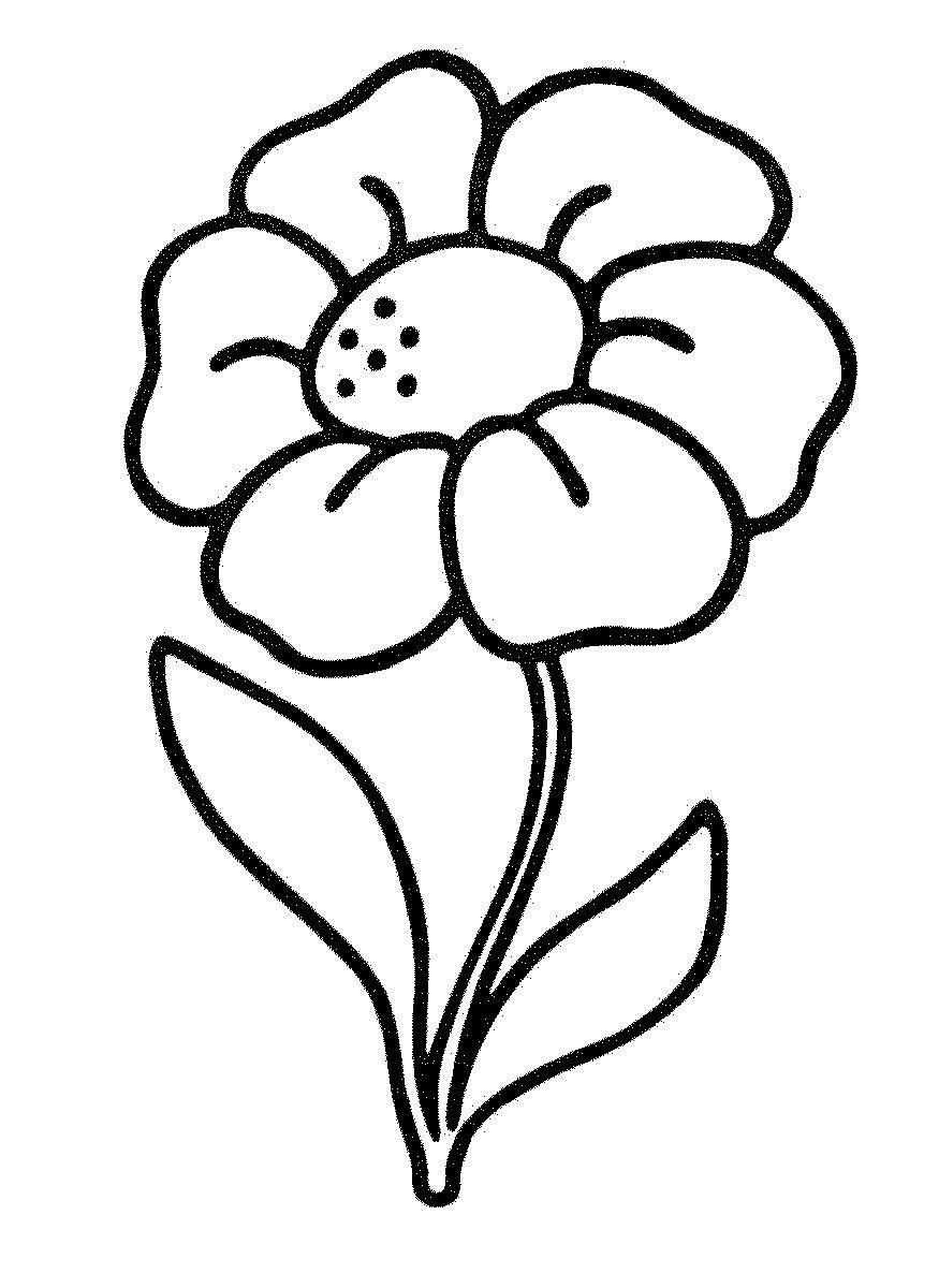 Цветок к с большими лепестками Лучшие раскраски с цветами