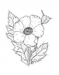 Мак с ворсинками Распечатываем раскраски цветы бесплатно