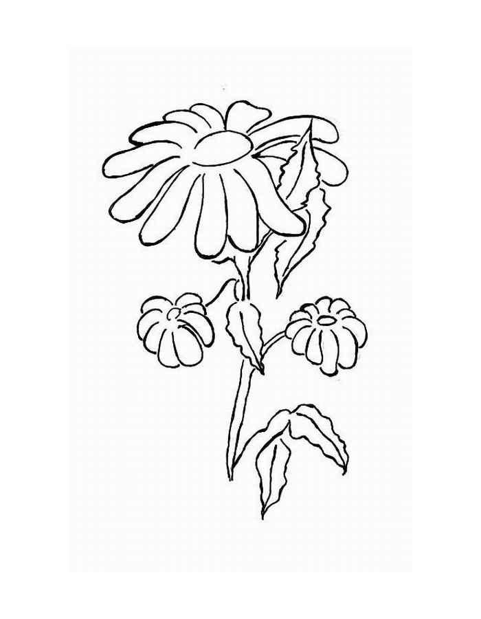 Цветы с опущенными лепестками Раскраски с чудесными цветами