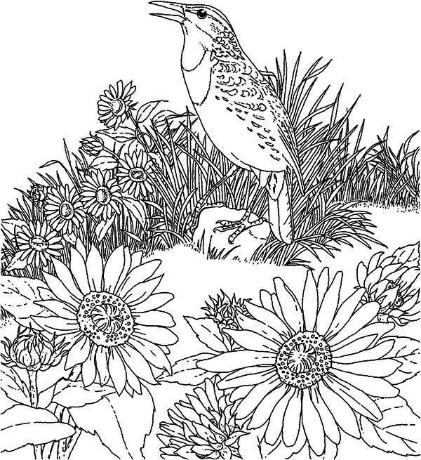 Поющая птица на клумбе с цветами Красивые раскраски цветов