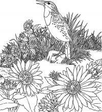 Поющая птица на клумбе с цветами Новые раскраски цветы