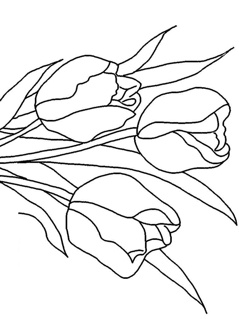 Клумба тюльпанов Раскраска цветок для скачивания