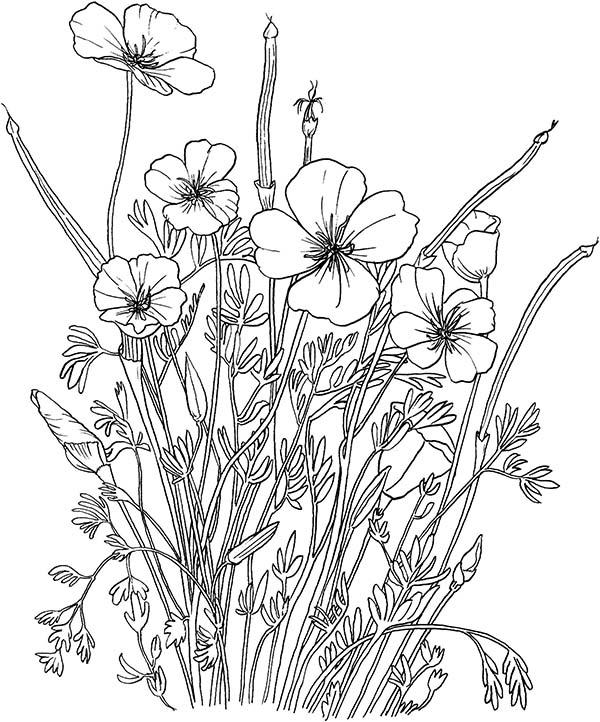 Простые полевые цветы Красивые раскраски цветов