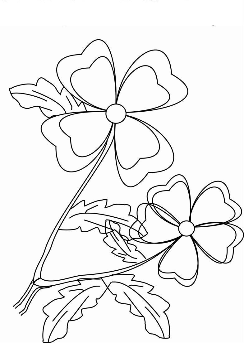 Цветы с 4 и 5 лепестками Раскраски цветы для детей