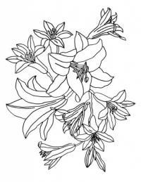 Клумба лилий Разукрашки цветы