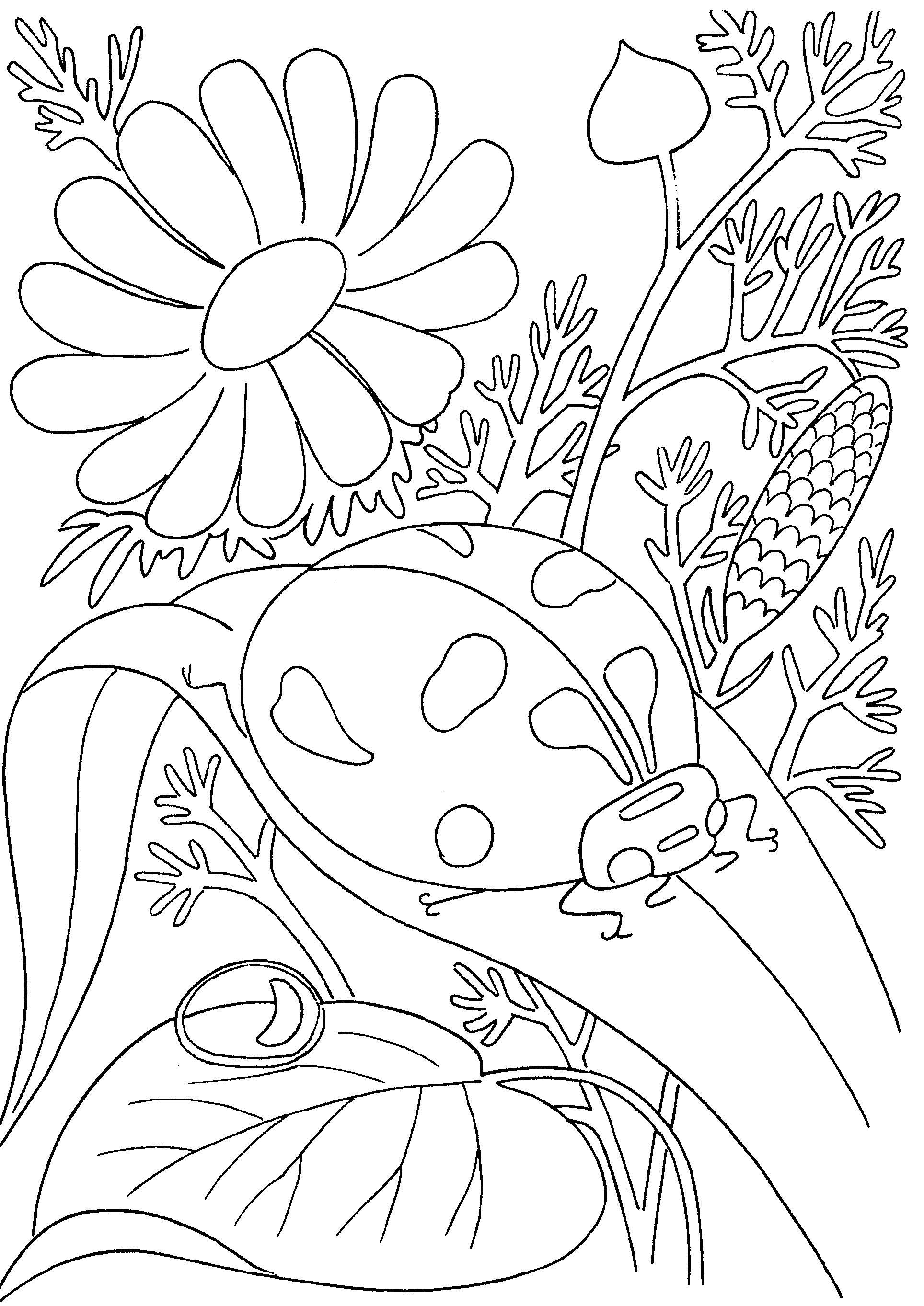 Божья коровка красивый цветок ромашки Раскраски бесплатно онлайн с цветамираскраски цветы