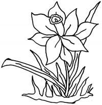 Клумба с нарциссом Раскраски цветы хорошего качества