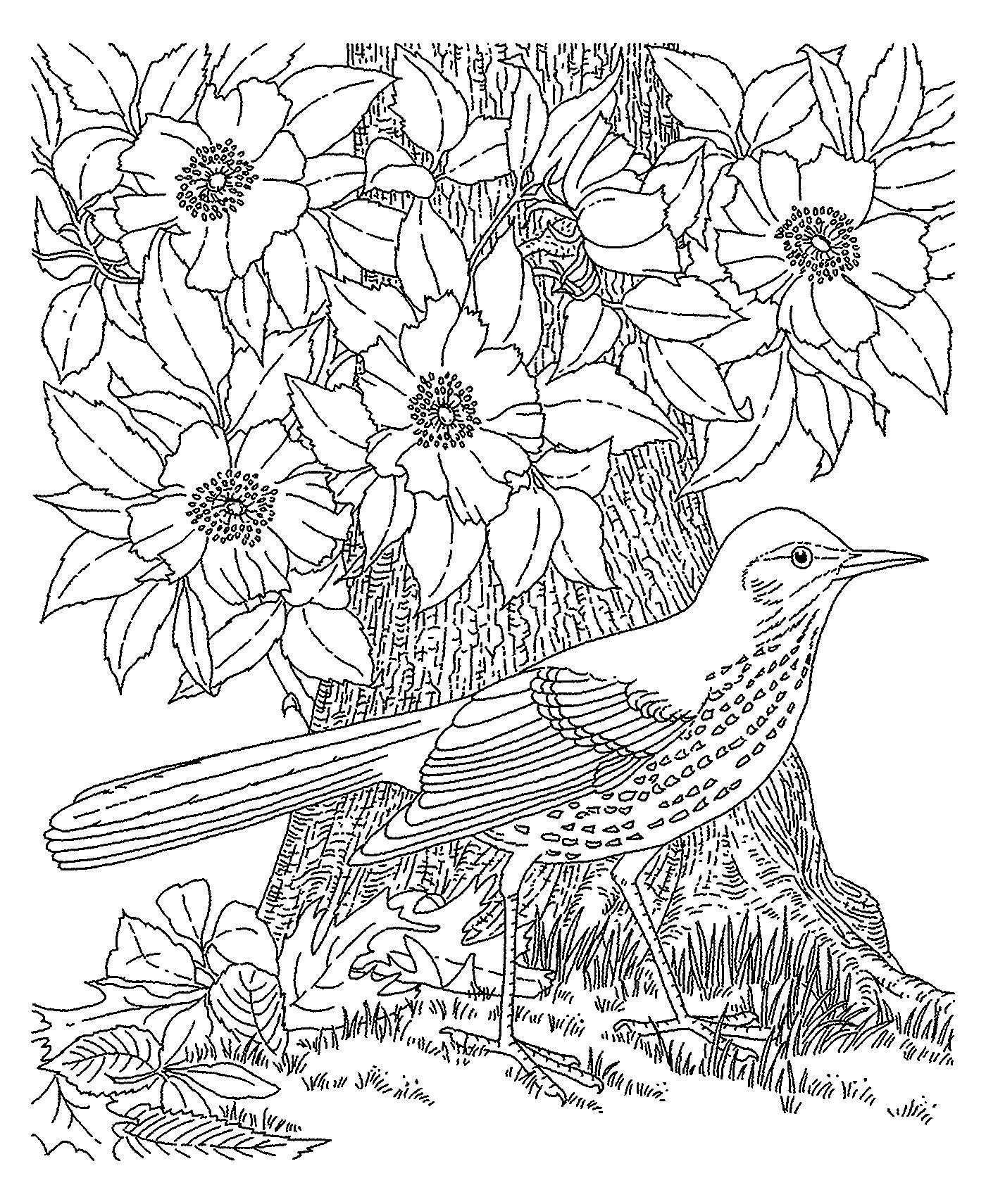 Птица Птица по цветущим деревом Раскраски с чудесными цветамираскраски цветы