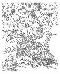 Птица по цветущим деревом Новые раскраски цветы