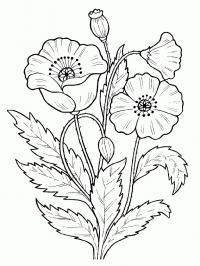 Арт терапия маки Фото раскраски цветы