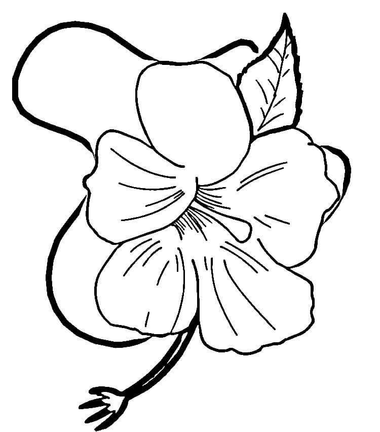 Полевой вьюн цветы раскраски онлайн бесплатно