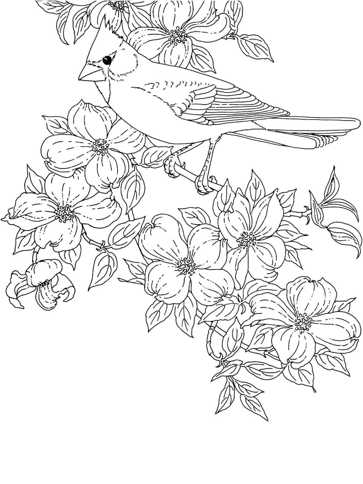 Птичка с хохолком на цветущей ветке дерева Распечатываем раскраски цветы бесплатно