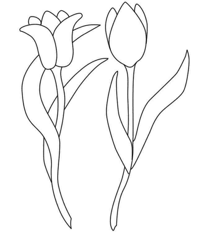 Тюльпаны два вида цветы раскраски онлайн бесплатно
