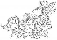 Рамочка из цветов пиона Раскраски детские с цветами
