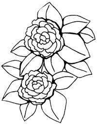 Цветки пиона Раскраски детские с цветами