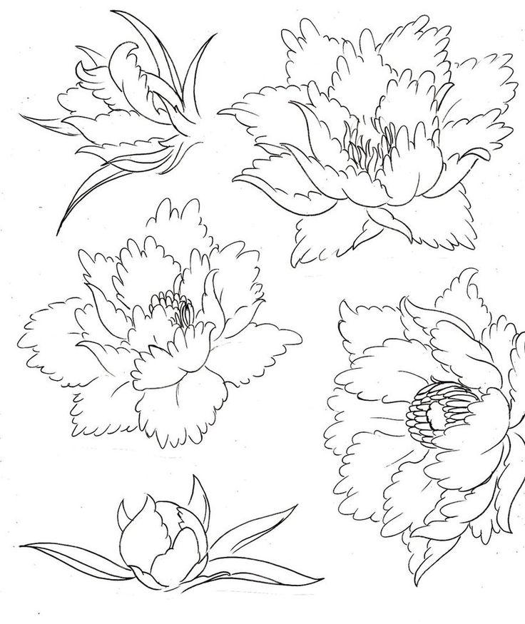 Пион этапы распускания цветка Раскраски детские с цветами