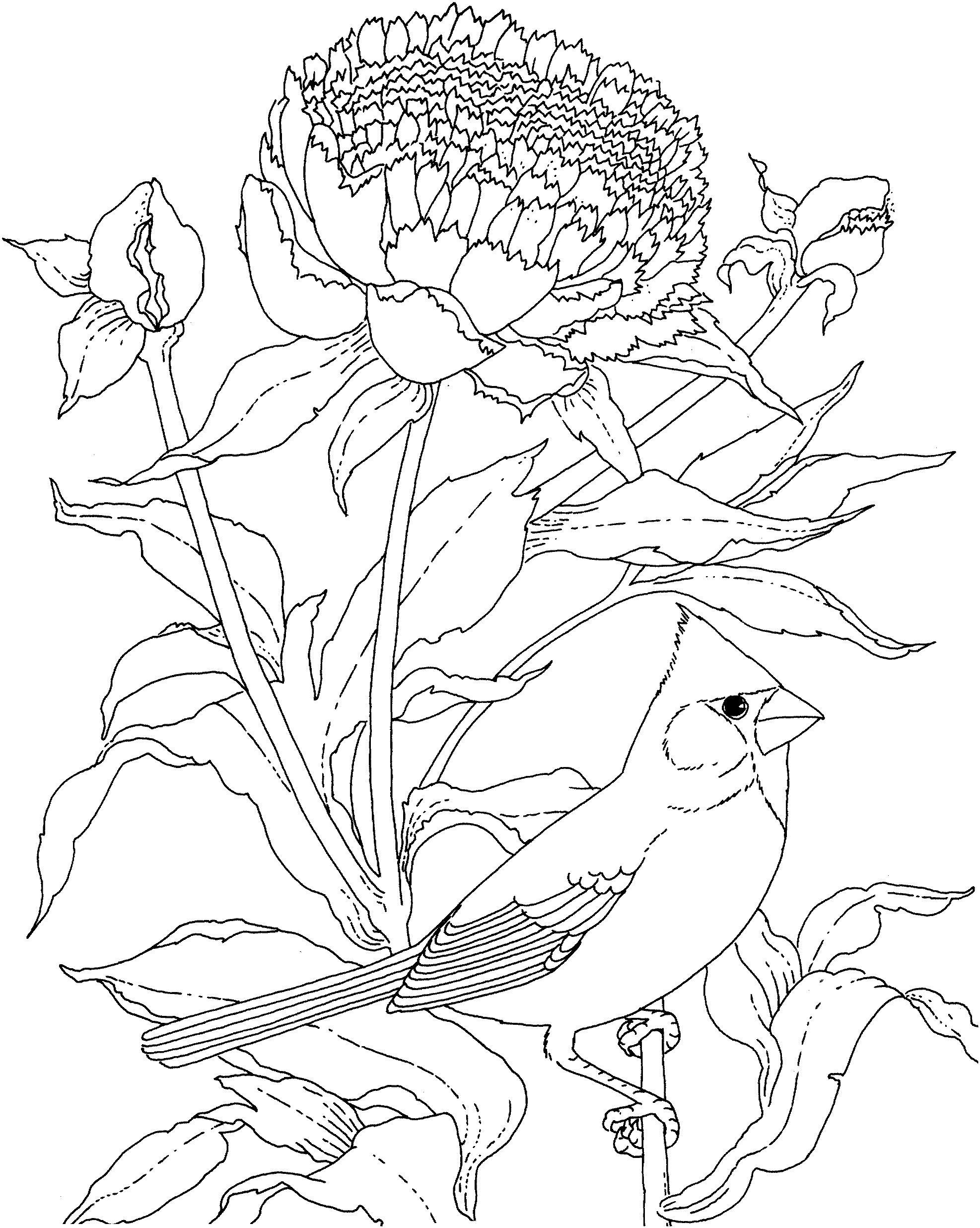 Птица Пион и птица с хохолком Раскраски с чудесными цветамираскраски цветы