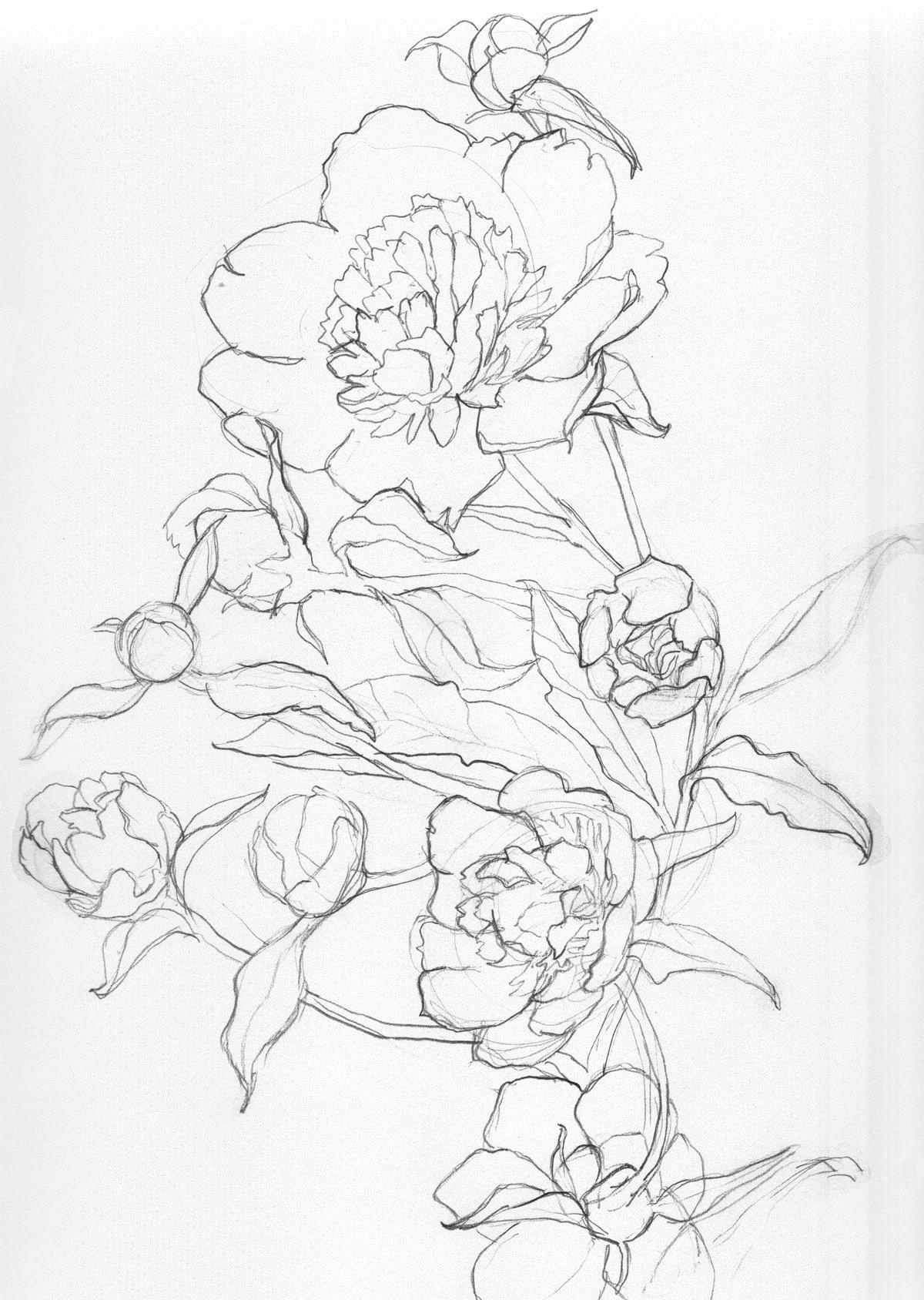 Ветка пиона Раскраски детские с цветами