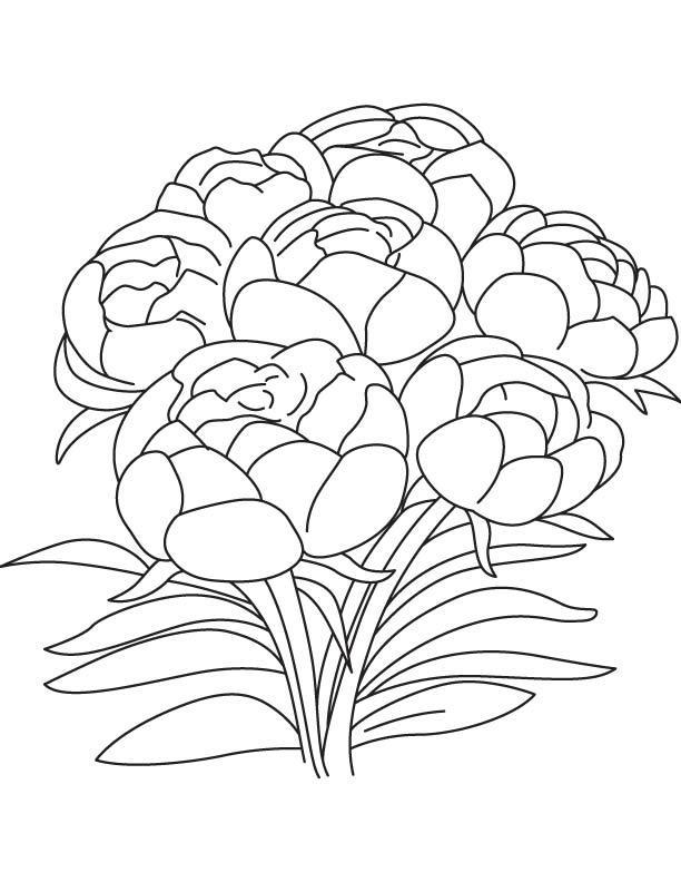 Букет пионов Раскраски с цветами распечатать бесплатно