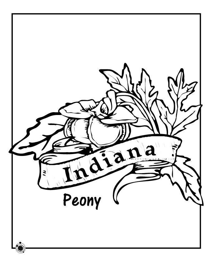 Пион индиана Раскраски детские с цветами