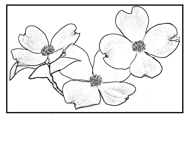 Экзотические цветы Раскраски цветов скачать
