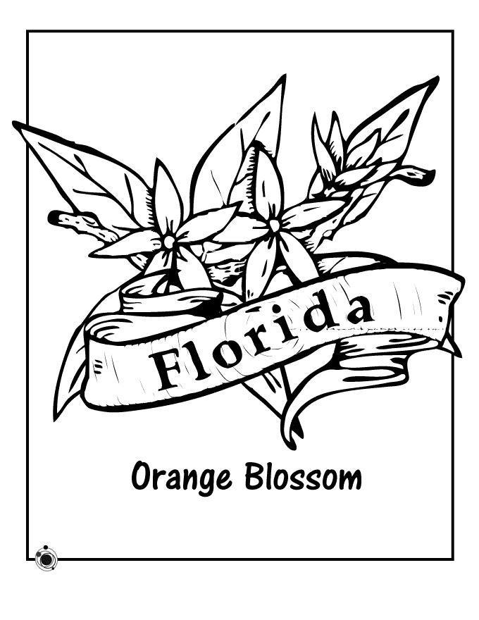 Оранжевый цветок флориды Раскраски цветов бесплатно