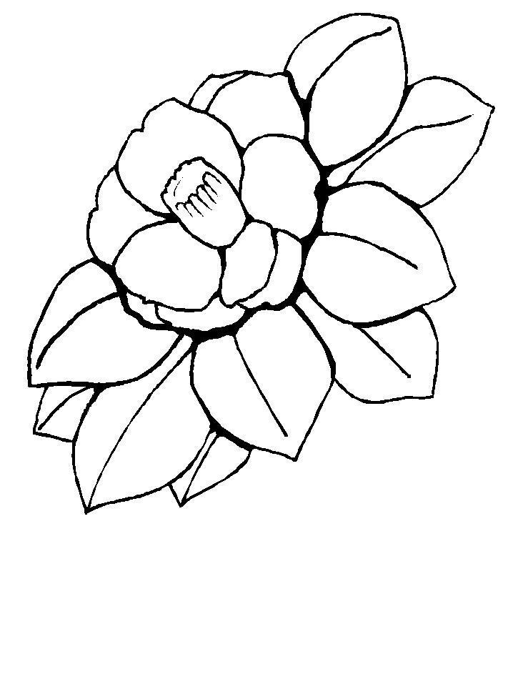 Камелия Раскраски цветы скачать