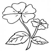 Цветы с пятью лепестками Галерея раскрасок с цветами онлайн
