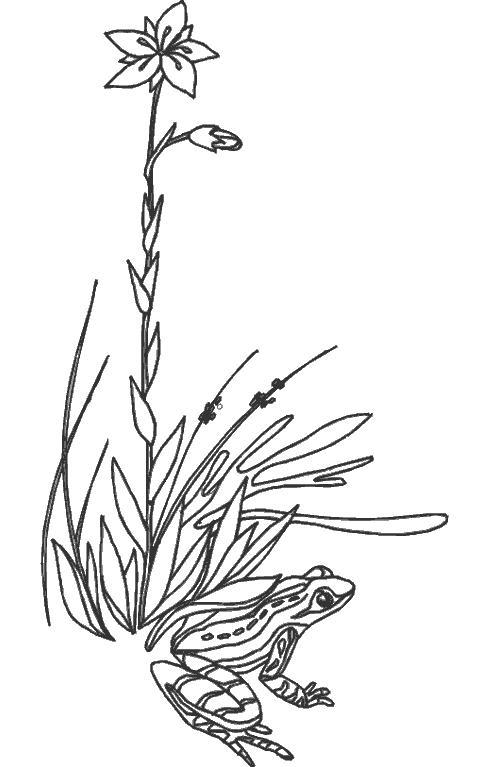 Трава и цветы Раскраски цветочки для детей бесплатно