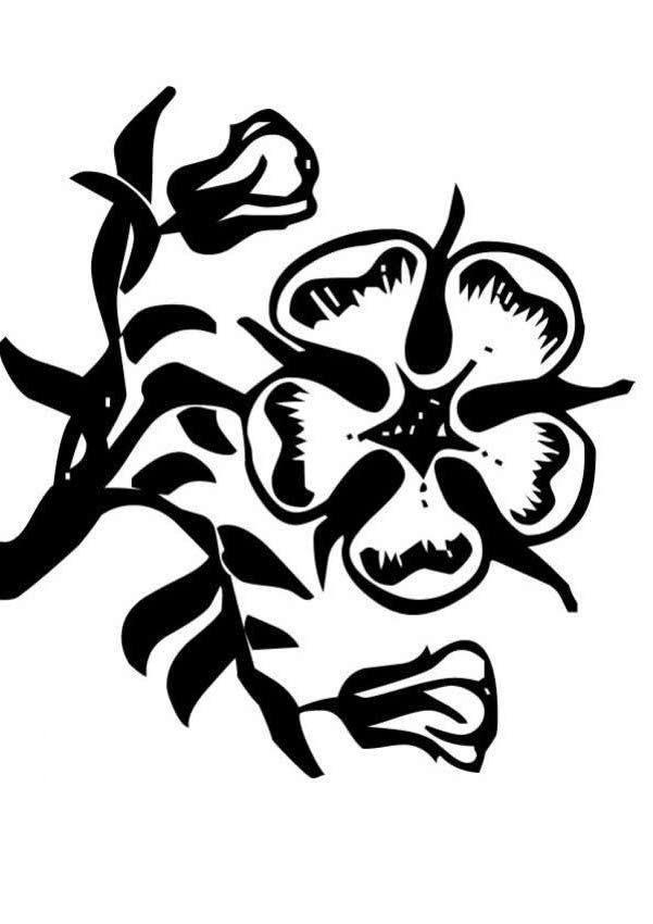 Вьюн Распечатываем раскраски цветы бесплатно