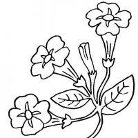 Петунья Раскраски цветы скачать