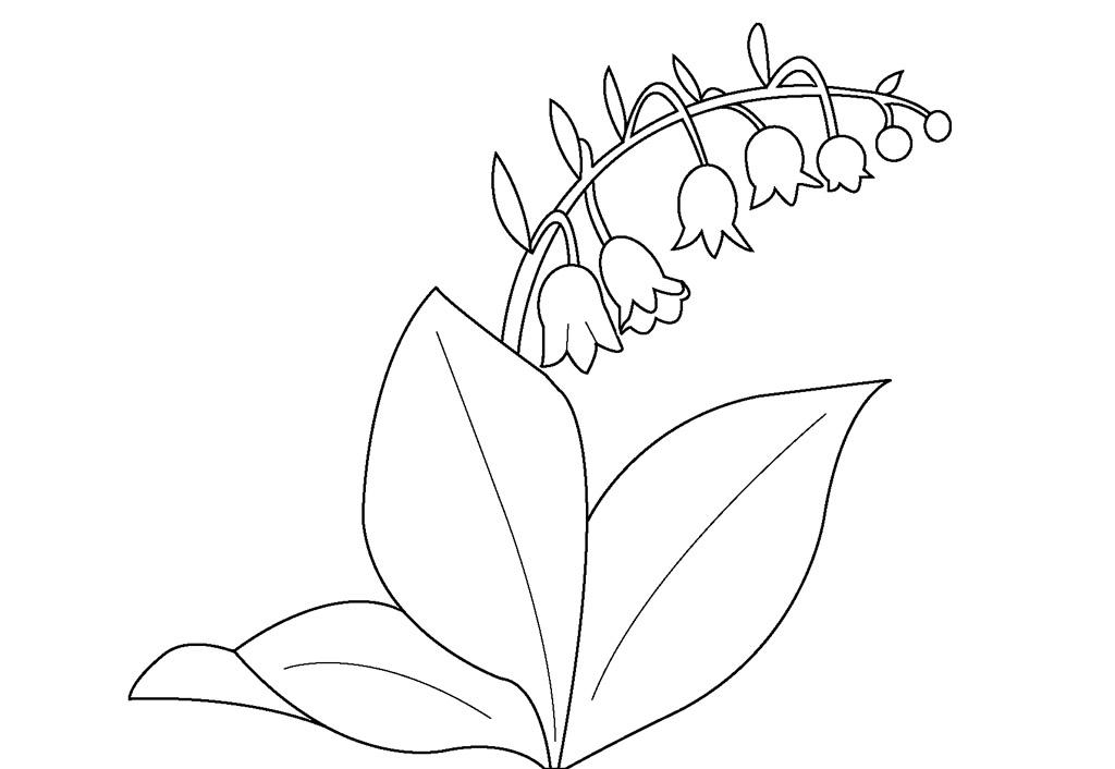 Цветущий ландыш Раскраски цветы для детей